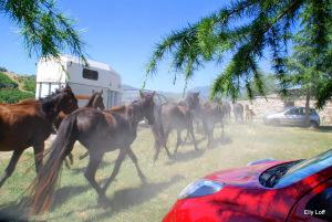 Перегон лошадей