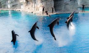 дельфинарийримини